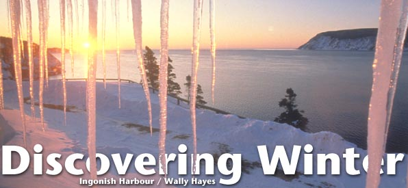 Discovering Winter header